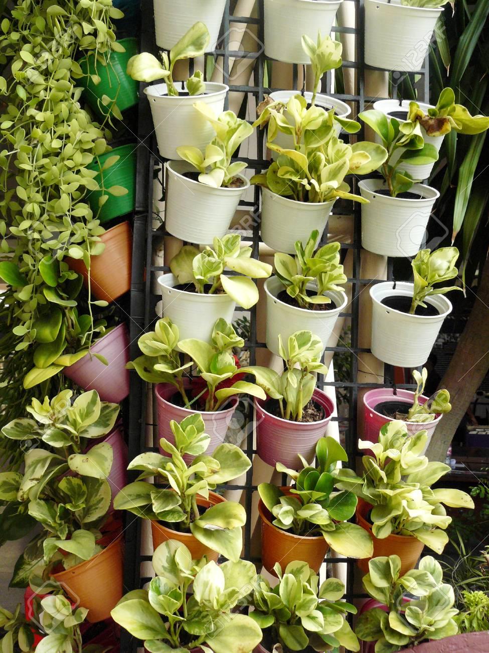 Vertikaler Garten Auf Wand Der Spalte, Kleine Blumentöpfe Auf ...