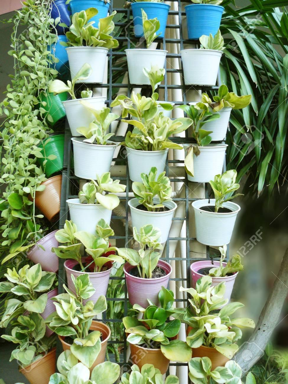 Vertikaler Garten Auf Wand Der Spalte, Viele Kleinen Blumentöpfe Und ...