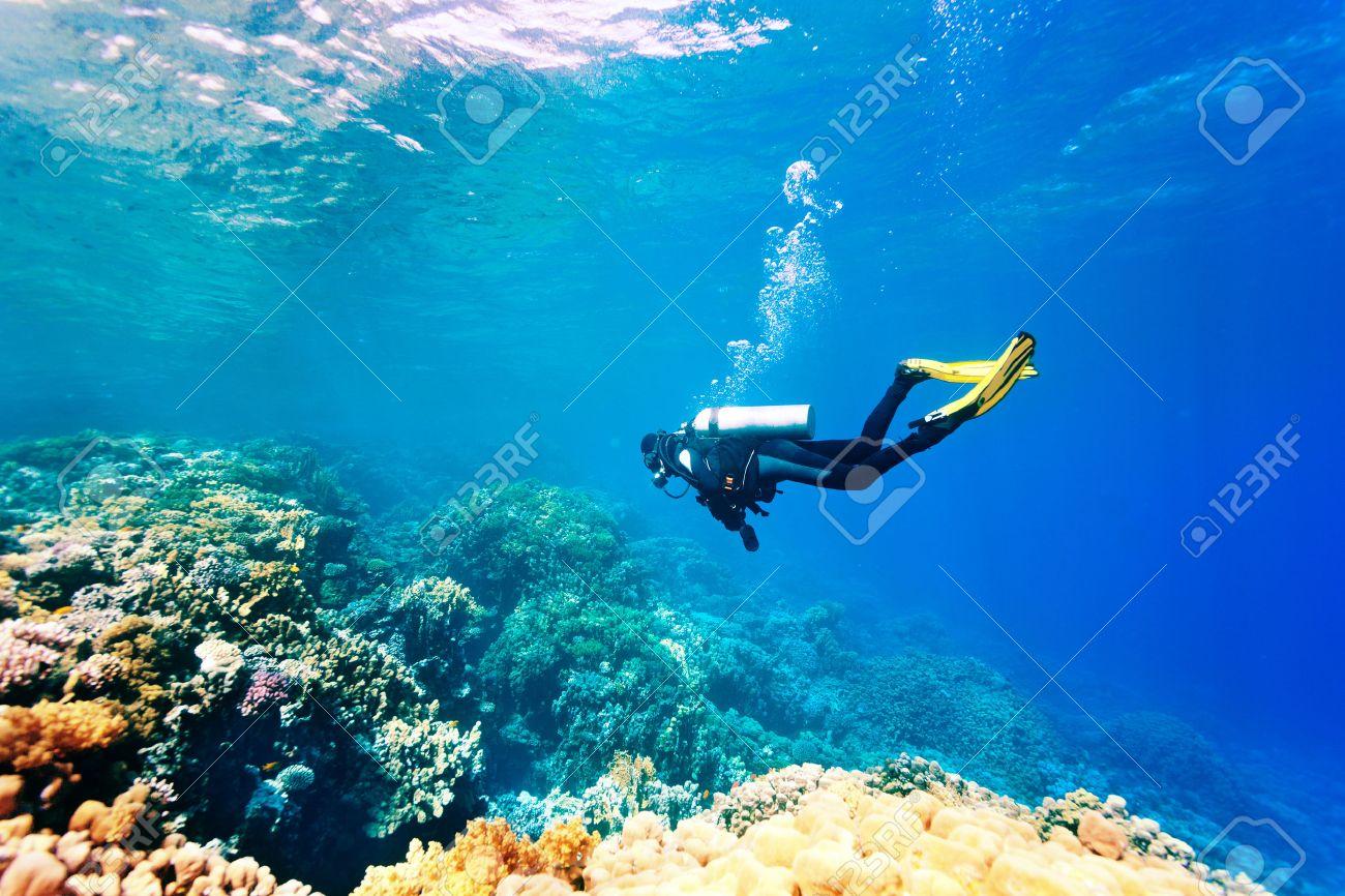 Female scuba diver swimming under water - 26283642