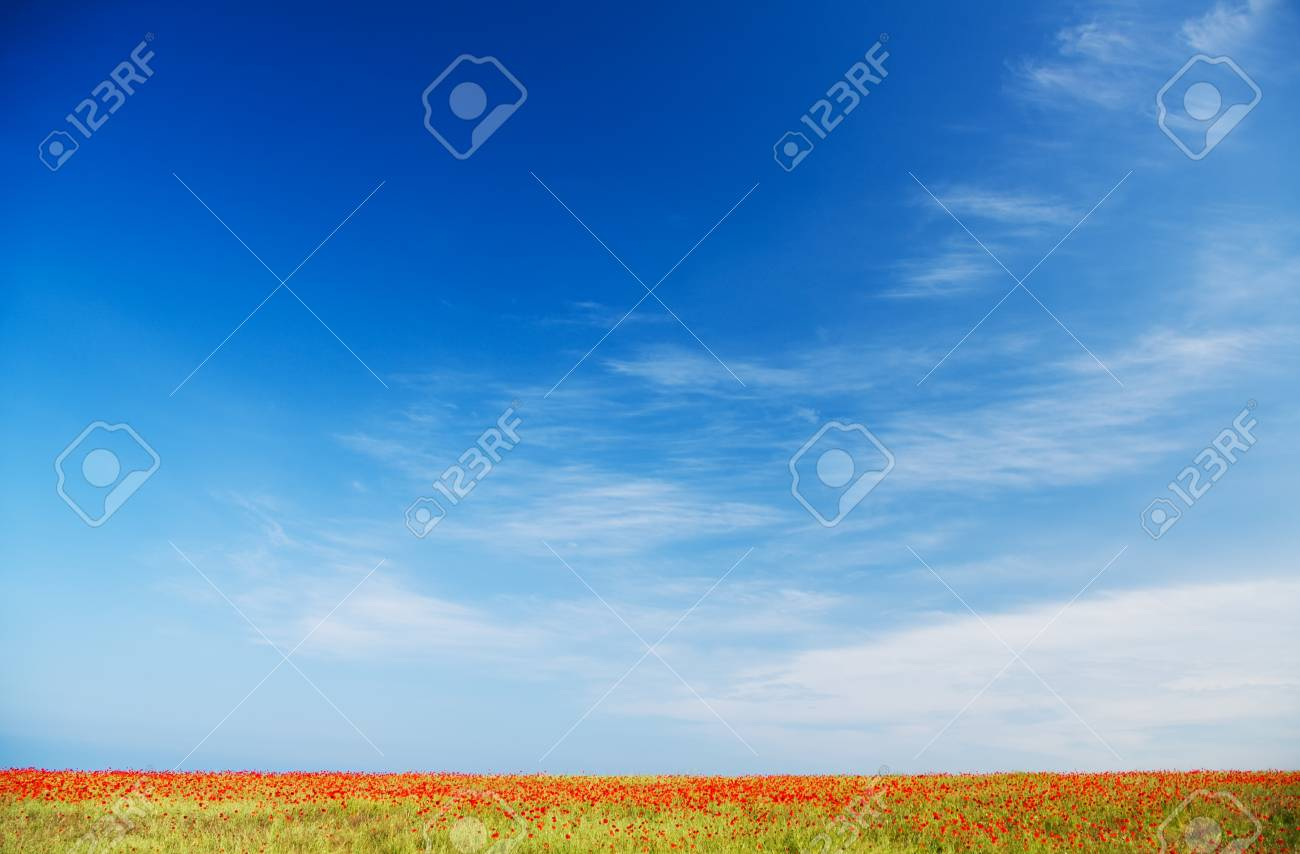 Poppy field against blue sky  Nature composition Stock Photo - 20173842