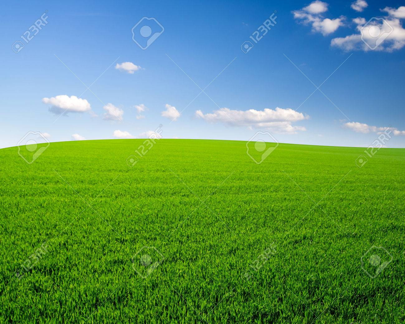 grass field background. Sky And Grass Field Background Stock Photo - 37912944