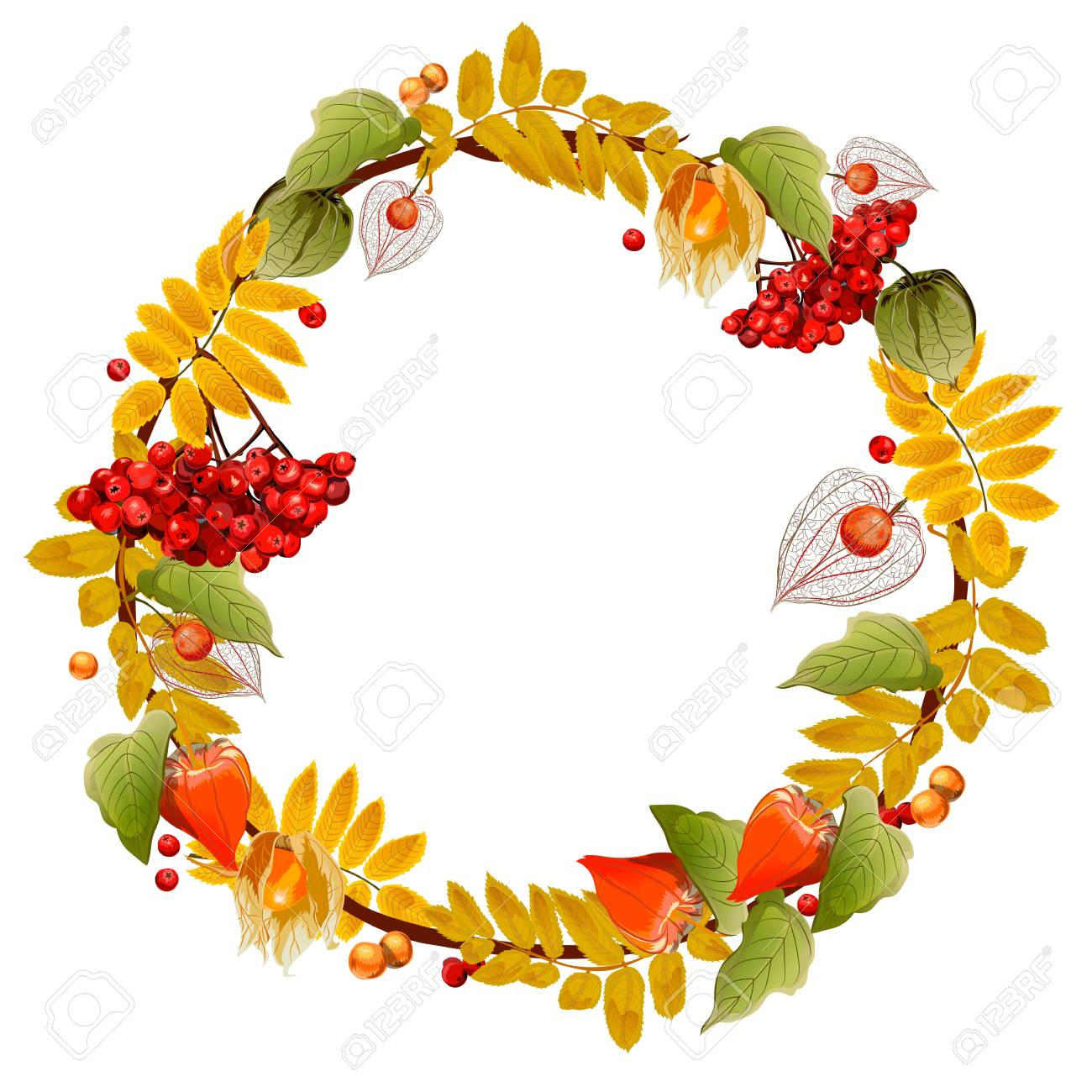 Autumn wreath of physalis and mountain ash. Isolated image. For postcards, posters, congratulations, approvals and other things. - 99565850
