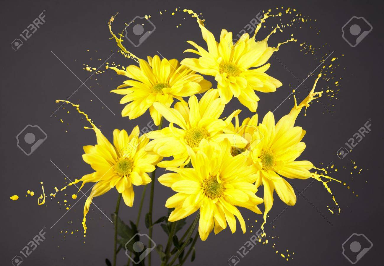 Yellow Flowers On Grey Background With Paint Splashes Stock Photo