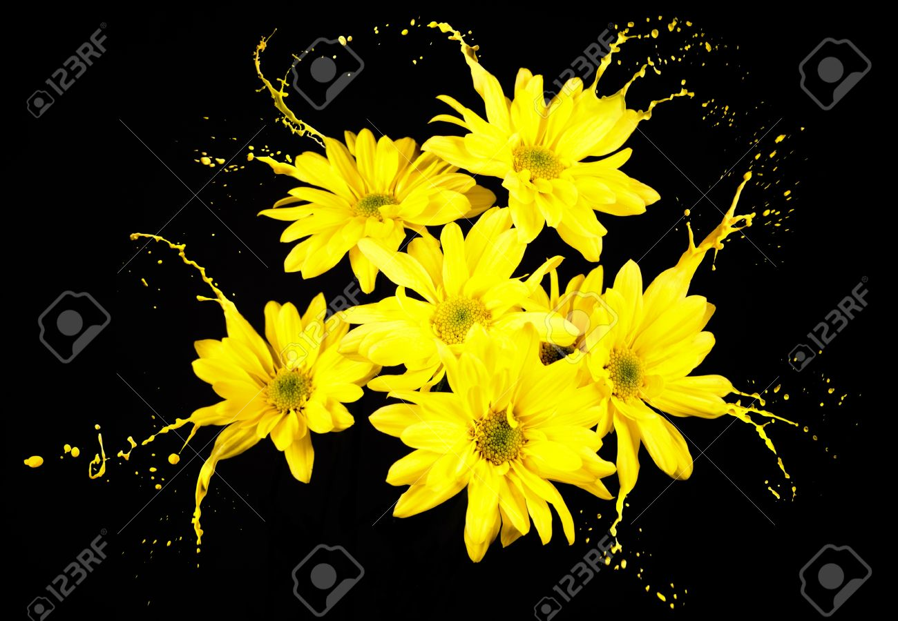 Yellow Flowers On Black Background With Paint Splashes Stock Photo Picture And Royalty Free Image Image 16791824