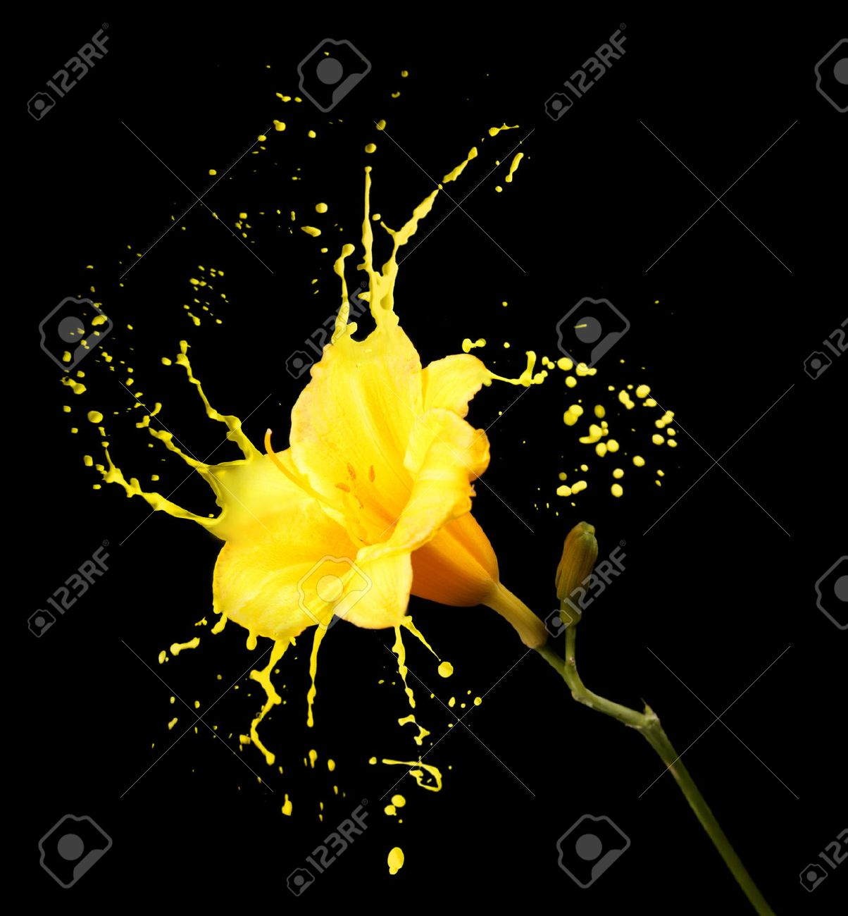 bright flower with yellow splashes on black background - 48697600