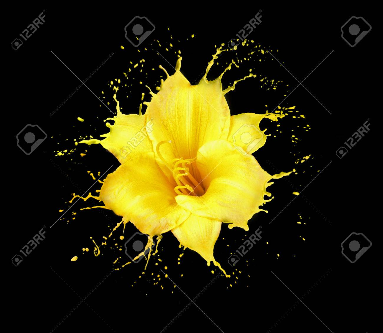 bright flower with yellow splashes on black background - 55431201