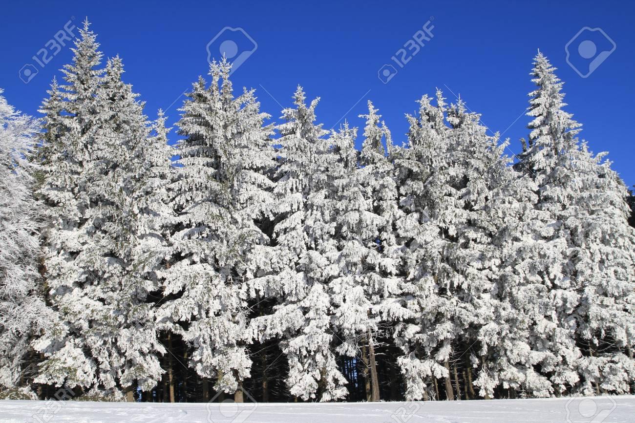 White Winter Wonderland Stock Photo - 9455364