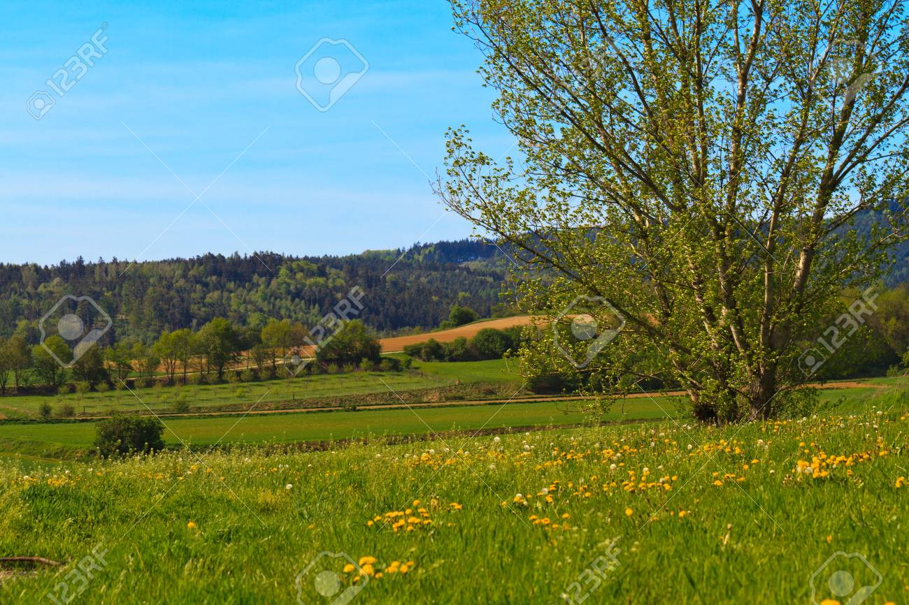Beautiful tree standing in yellow flowers meadow Stock Photo - 13908734