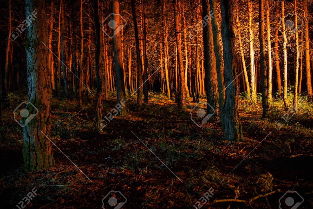 magical lights sparkling in mysterious forest at night. Pine forest with strange light. Long exposure shot - 129832960
