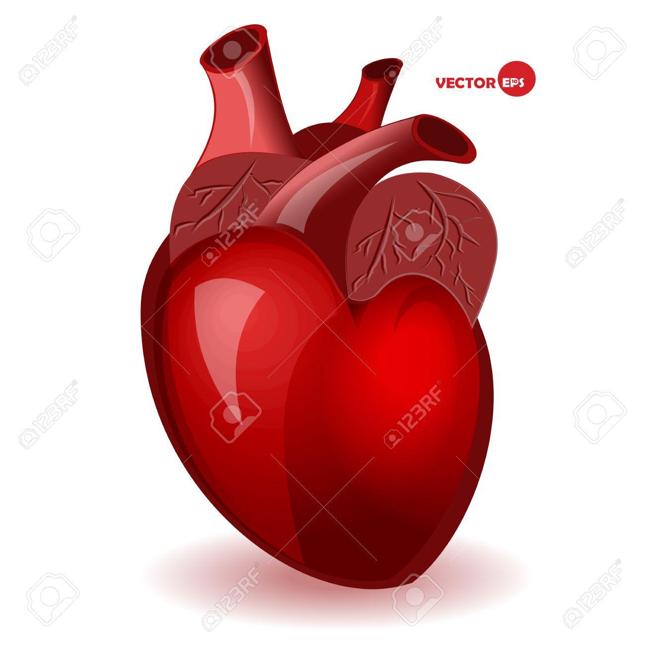 Körper Herz Mit Adern In Einem Einfachen Comic-Stil. Valentinstag ...