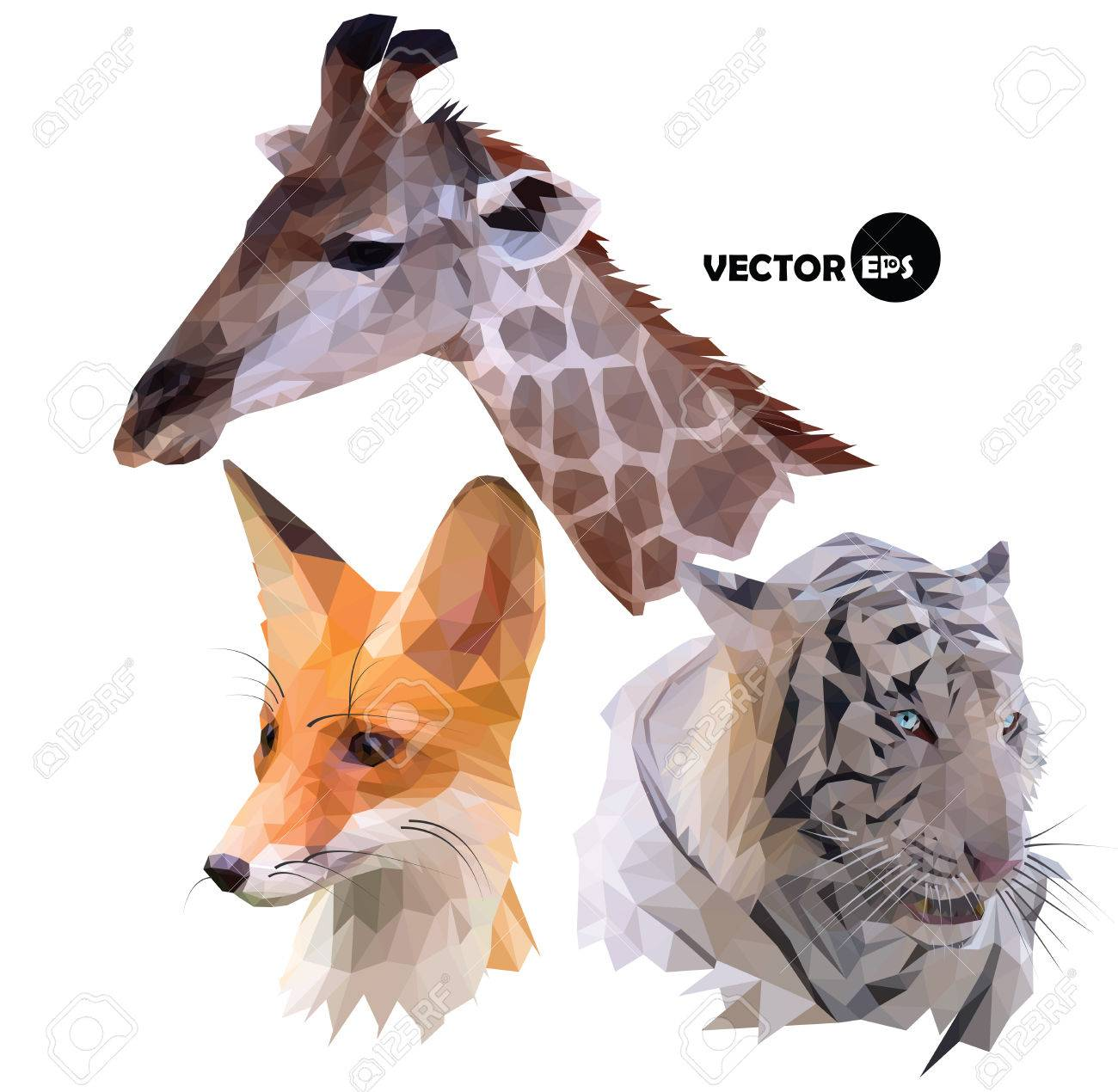 Set Of Portraits Wild Animals A Giraffe White Tiger Red Fox Realistic In