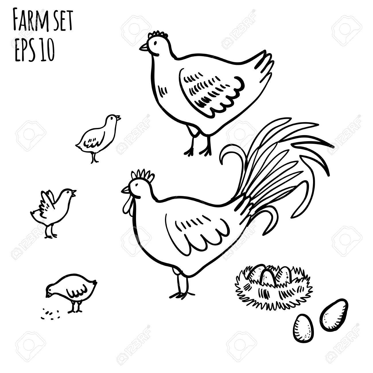 vector illustration set with rooster hen and chicken handy