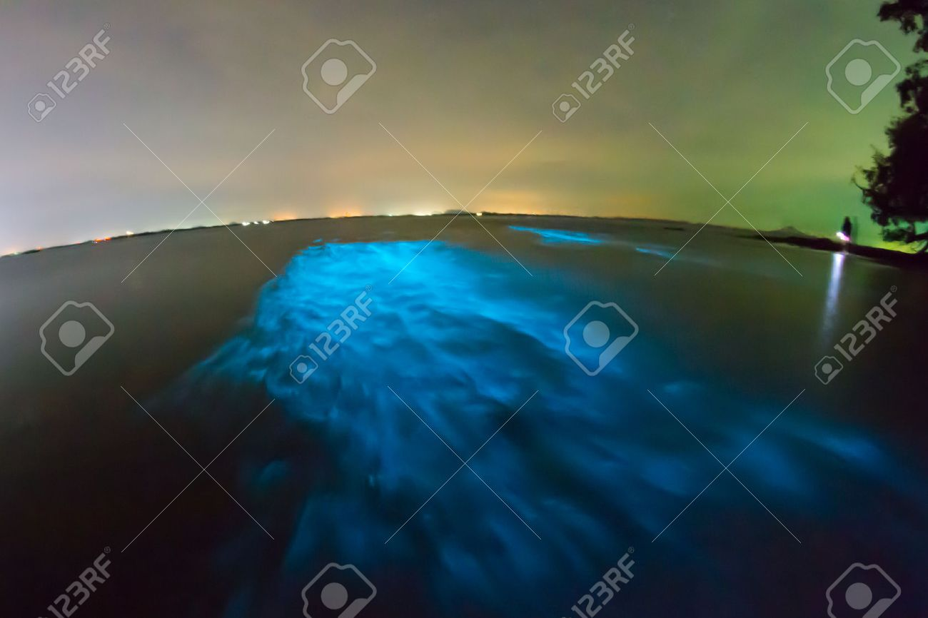 Bioluminescent plankton. Glowing wave with long exposure. - 72083309