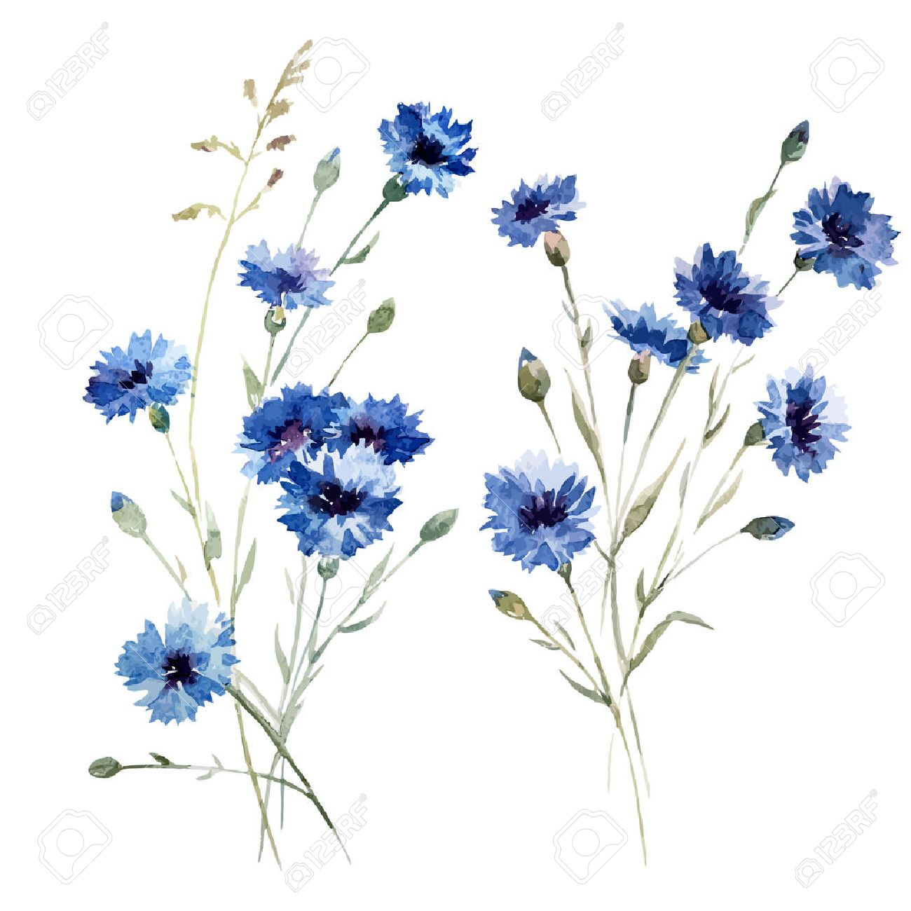 Beautiful Vectorn Pattern With Blue Flowers On White Fon Royalty