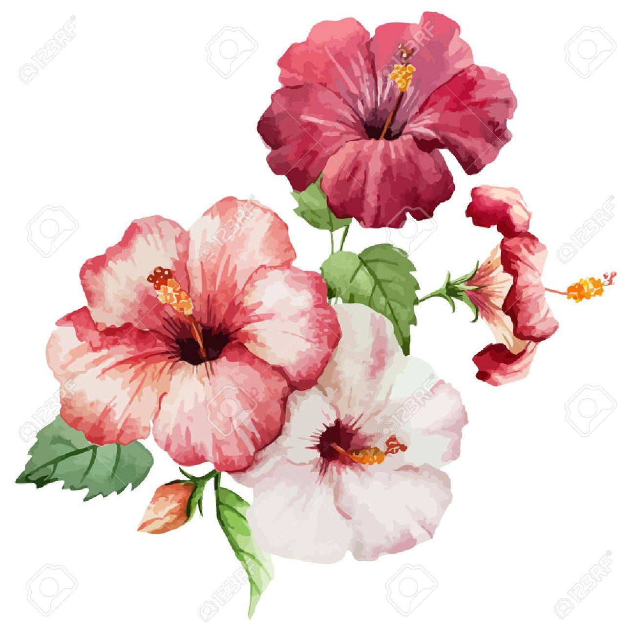 13,734 Hibiscus Flower Cliparts, Stock Vector And Royalty Free ...