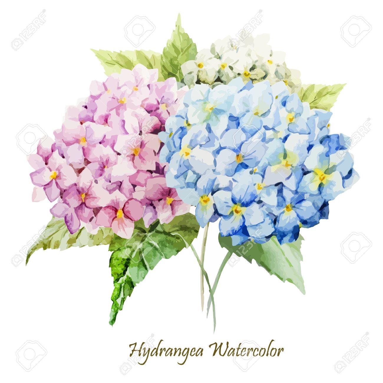 hermosa acuarela vector hortensia ramo diferentes colores foto de archivo