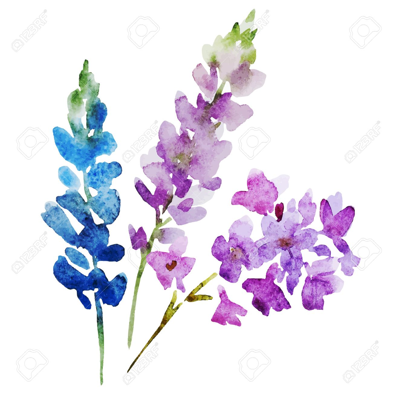 Beautiful Image With Nice Watercolor Flowers Stock Vector