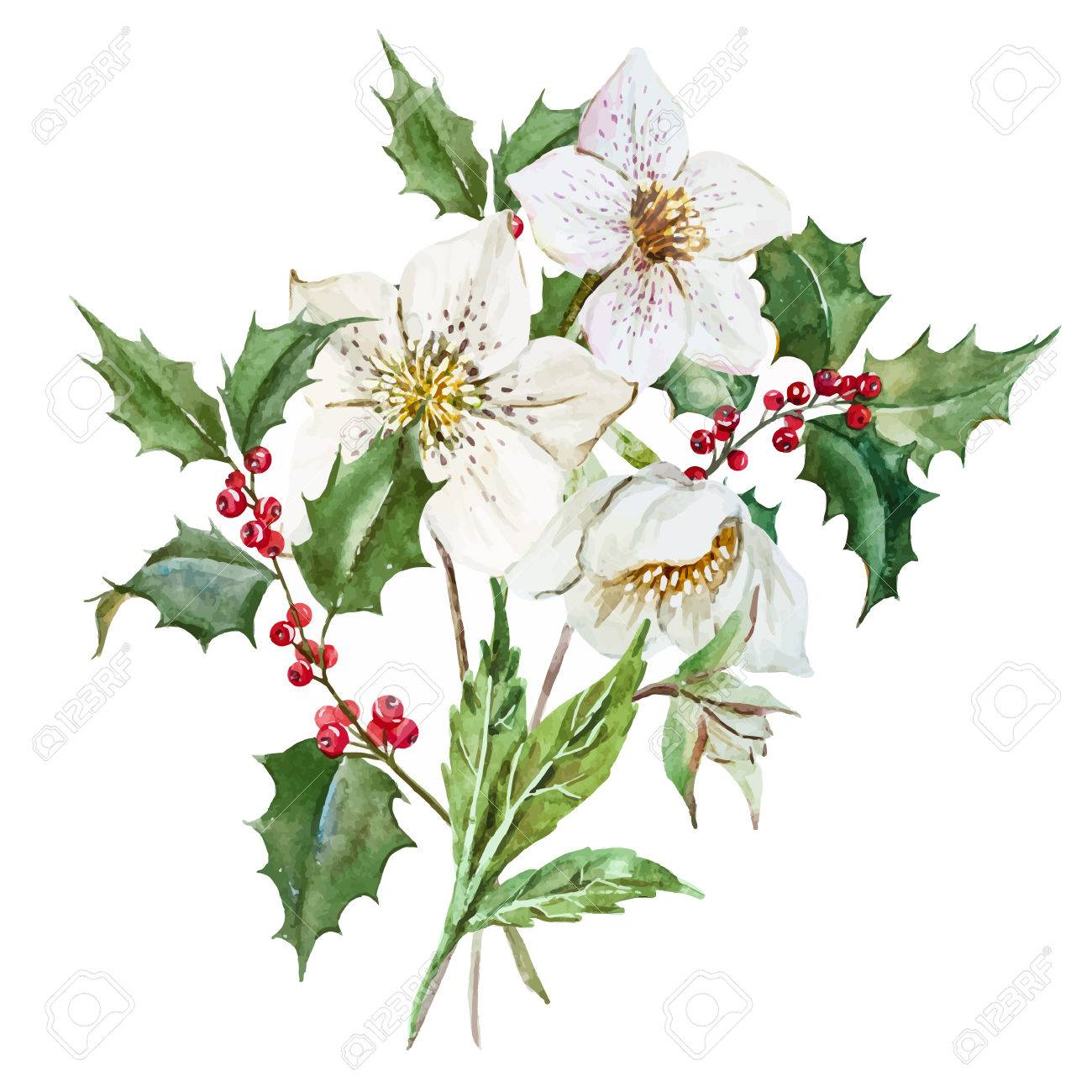 Christmas Flowers.Beautiful Image With Nice Watercolor Christmas Flowers