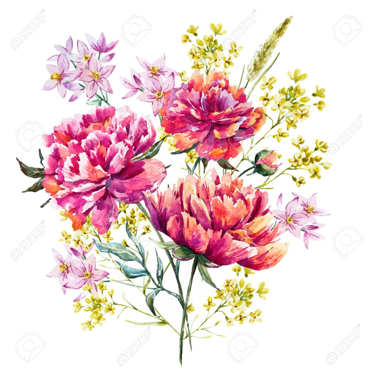 watercolor peony flowers royalty free cliparts vectors and stock rh 123rf com peony vector free peony vector free