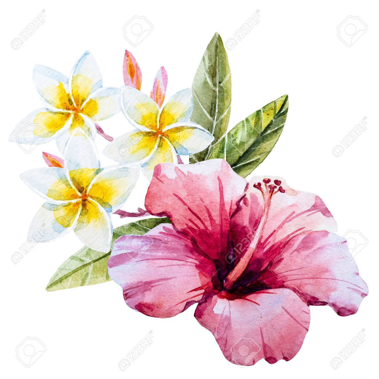 Beautiful image with nice watercolor hand drawn hibiscus flower beautiful image with nice watercolor hand drawn hibiscus flower stock photo 55450080 izmirmasajfo