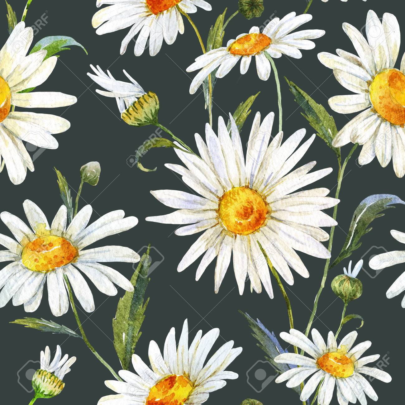 Beautiful Pattern With Nice Watercolor Daisy Flowers Stock Photo