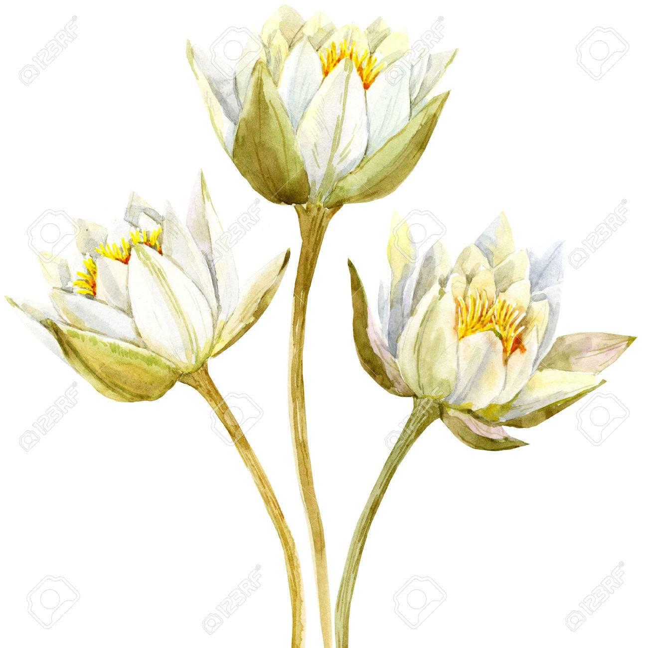 Beautiful Image With Nice Watercolor Lotus Flowers Stock Photo