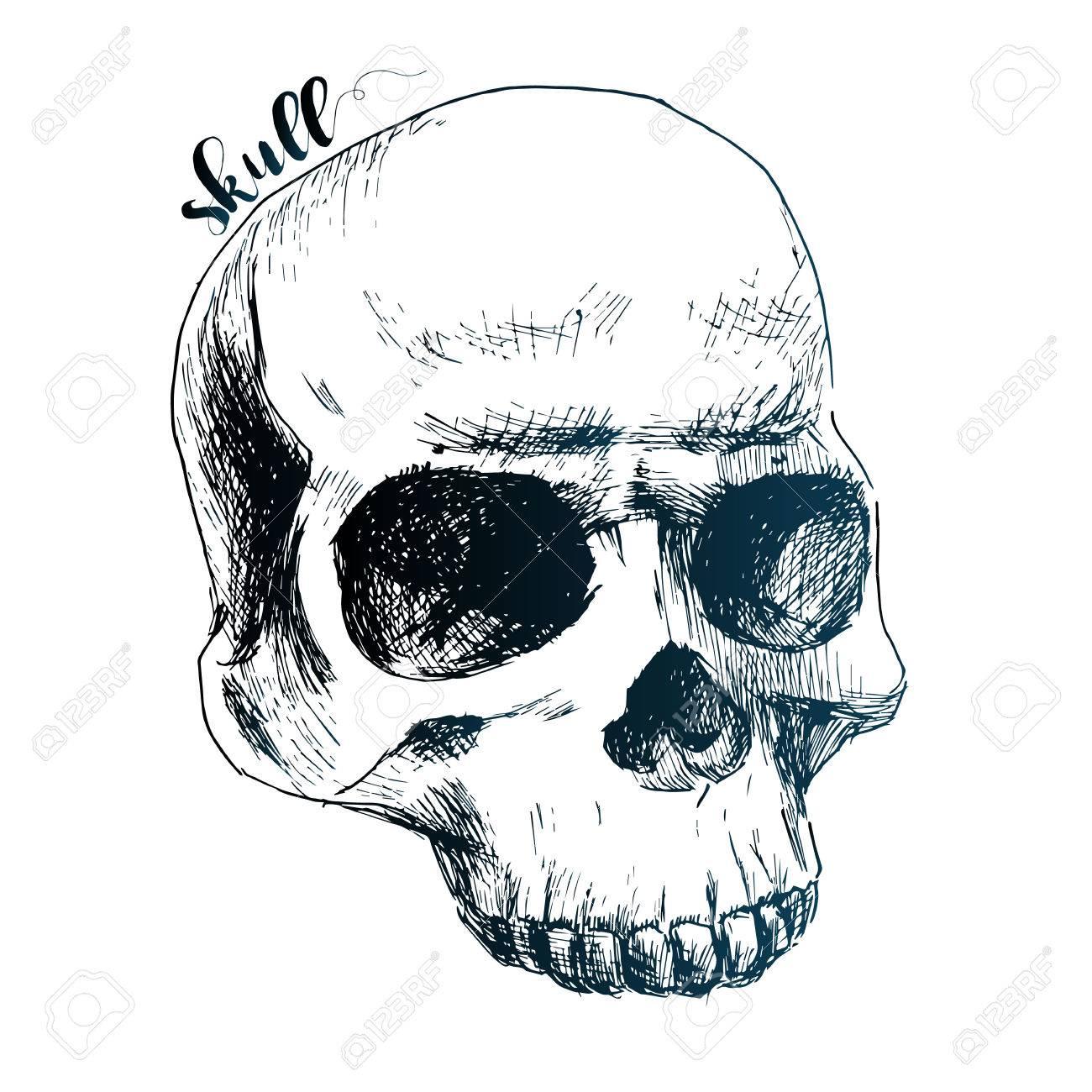 Hermosa Imagen Vectorial Con El Cráneo Humano De Dibujos Animados ...