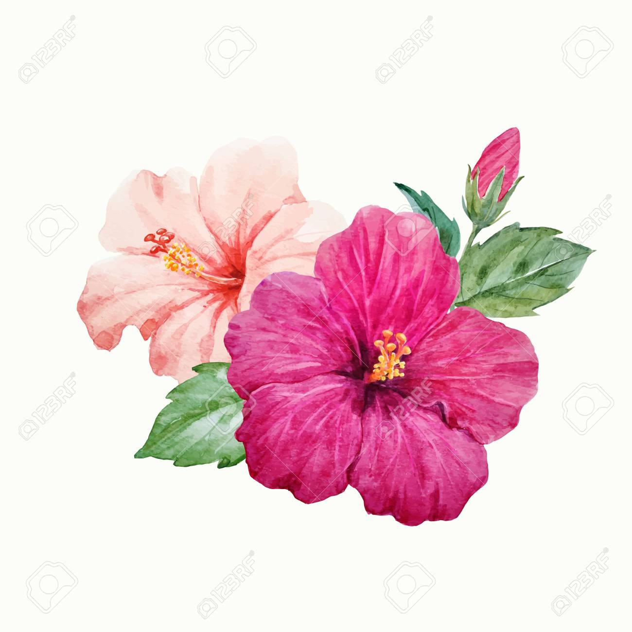 Watercolor Vector Tropical Hibiscus Flower Royalty Free Cliparts