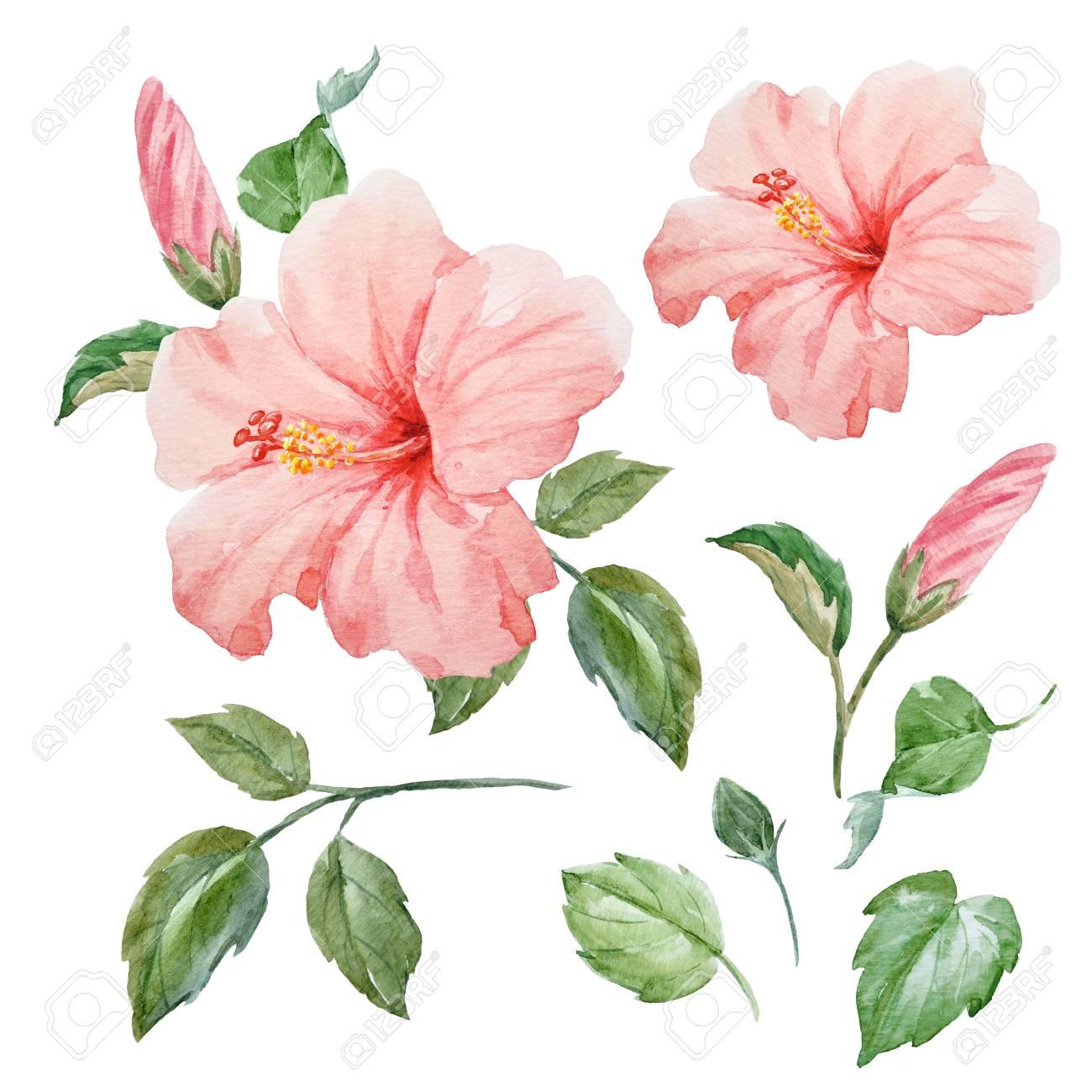 Watercolor tropical hibiscus flower stock photo picture and royalty stock photo watercolor tropical hibiscus flower izmirmasajfo