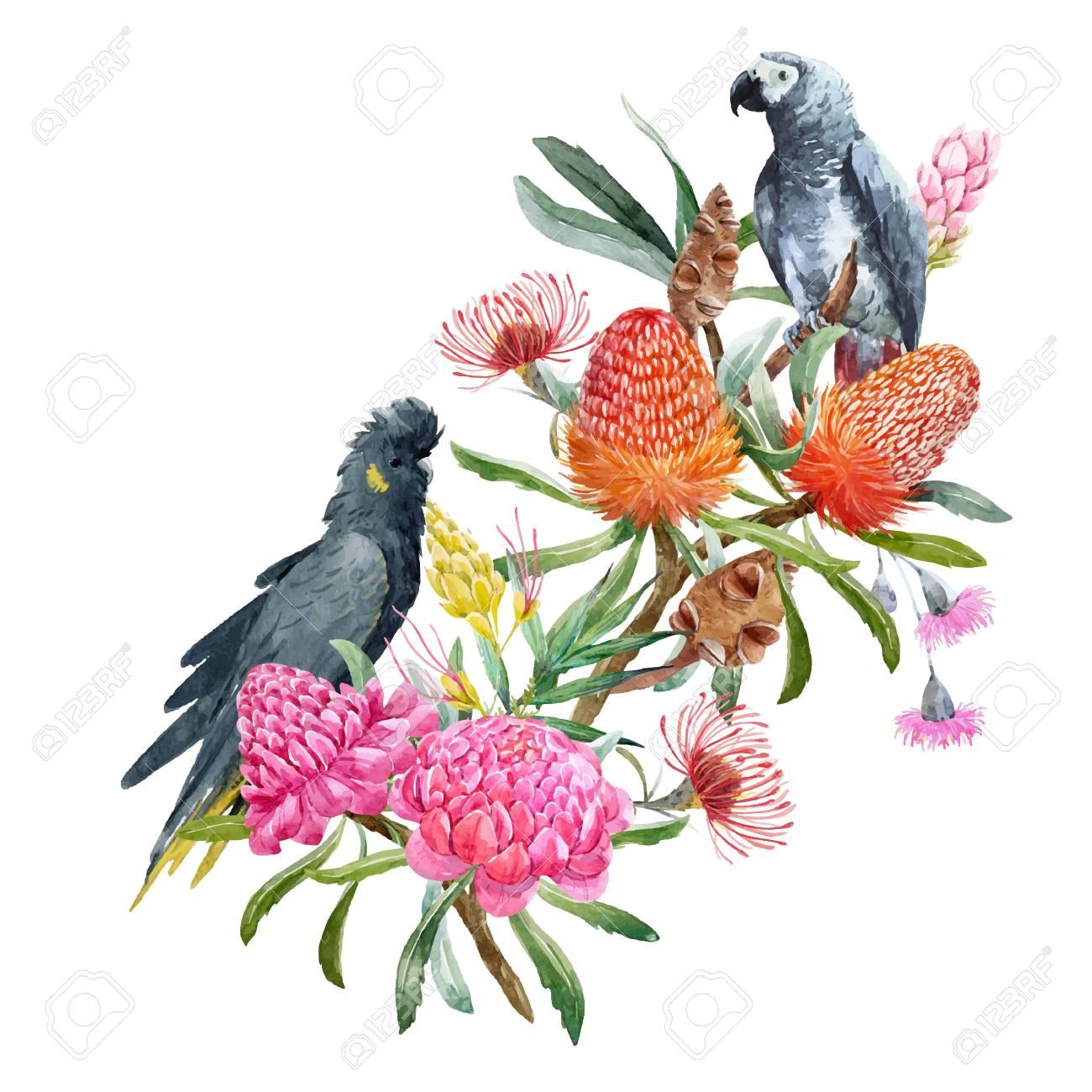 Watercolor banksia flower vector composition - 89914516