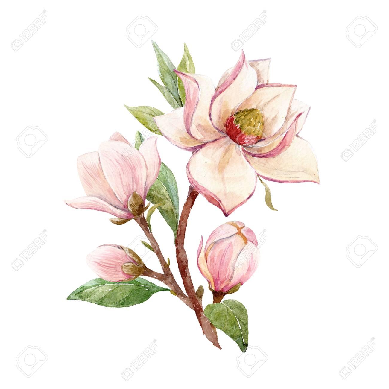 Watercolor magnolia floral composition - 94035166