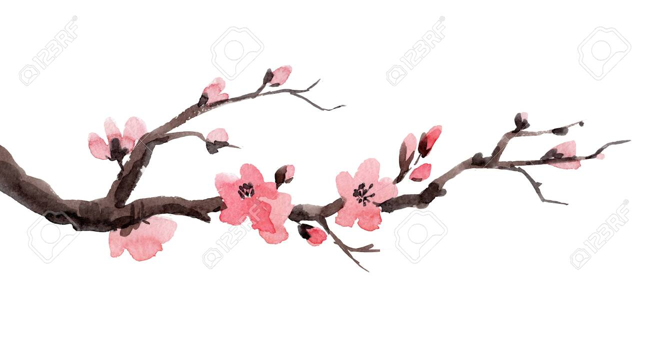 Watercolor Sakura Branch Stock Photo Picture And Royalty Free Image Image 122589744