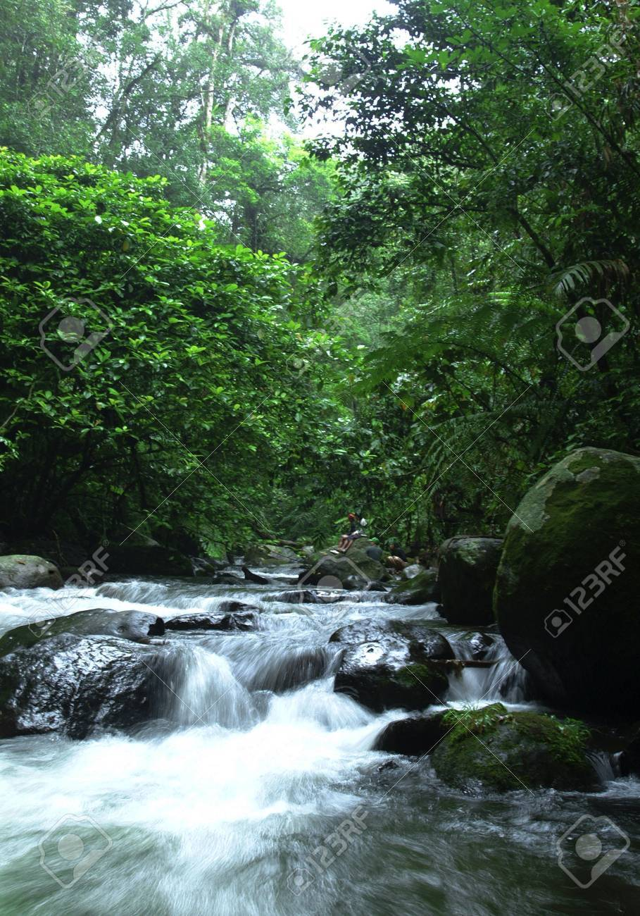 Tropical River Stock Photo - 10021641