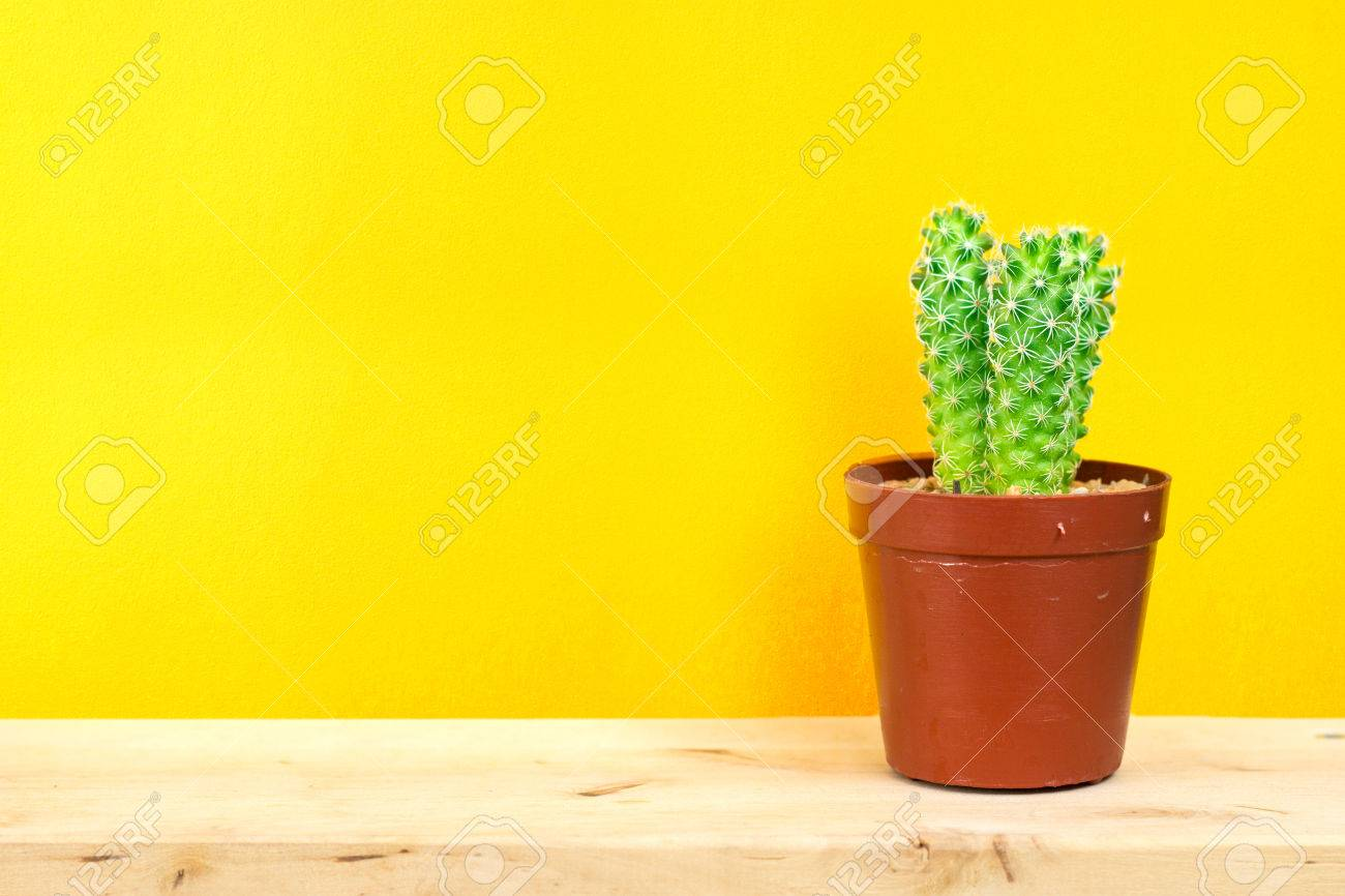 Small Cactus In A Flowerpot On Yellow Background Stock Photo