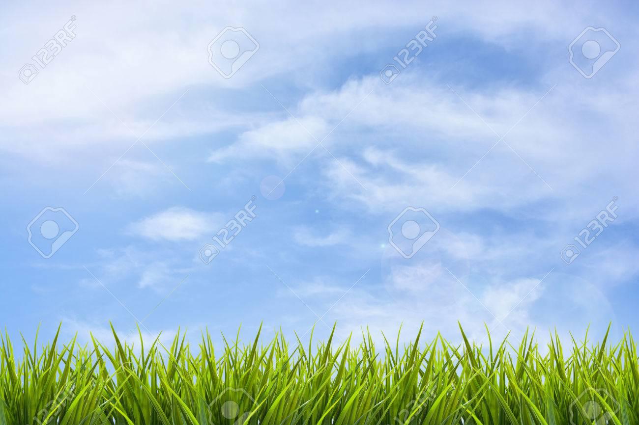 Grass grass under blue sky and clouds background - 39975681