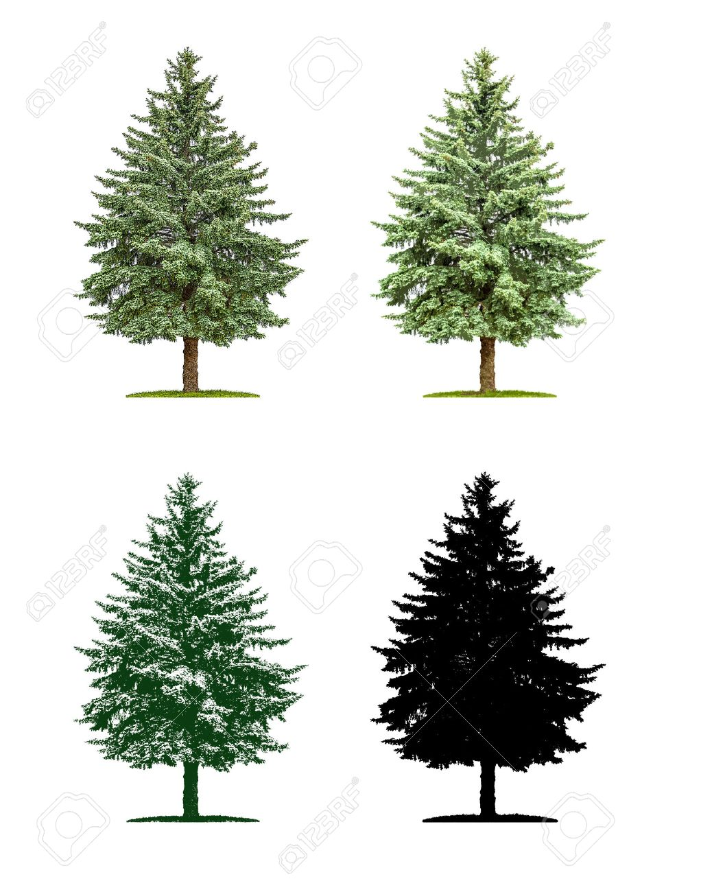 21 116 evergreen tree stock illustrations cliparts and royalty