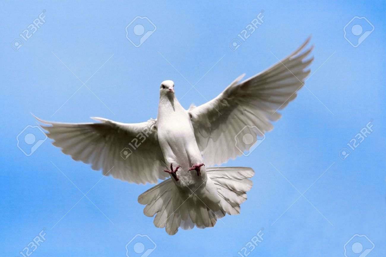 White dove flying on on the Sky. Stock Photo - 3897485