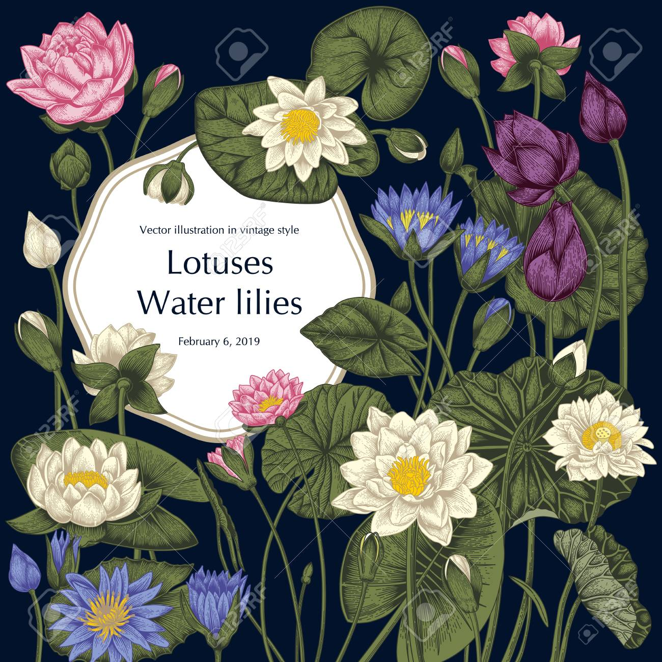 Lotus and water lilies, Water plants. Vector illustration in vintage style. Vegetable drawing. - 122106718