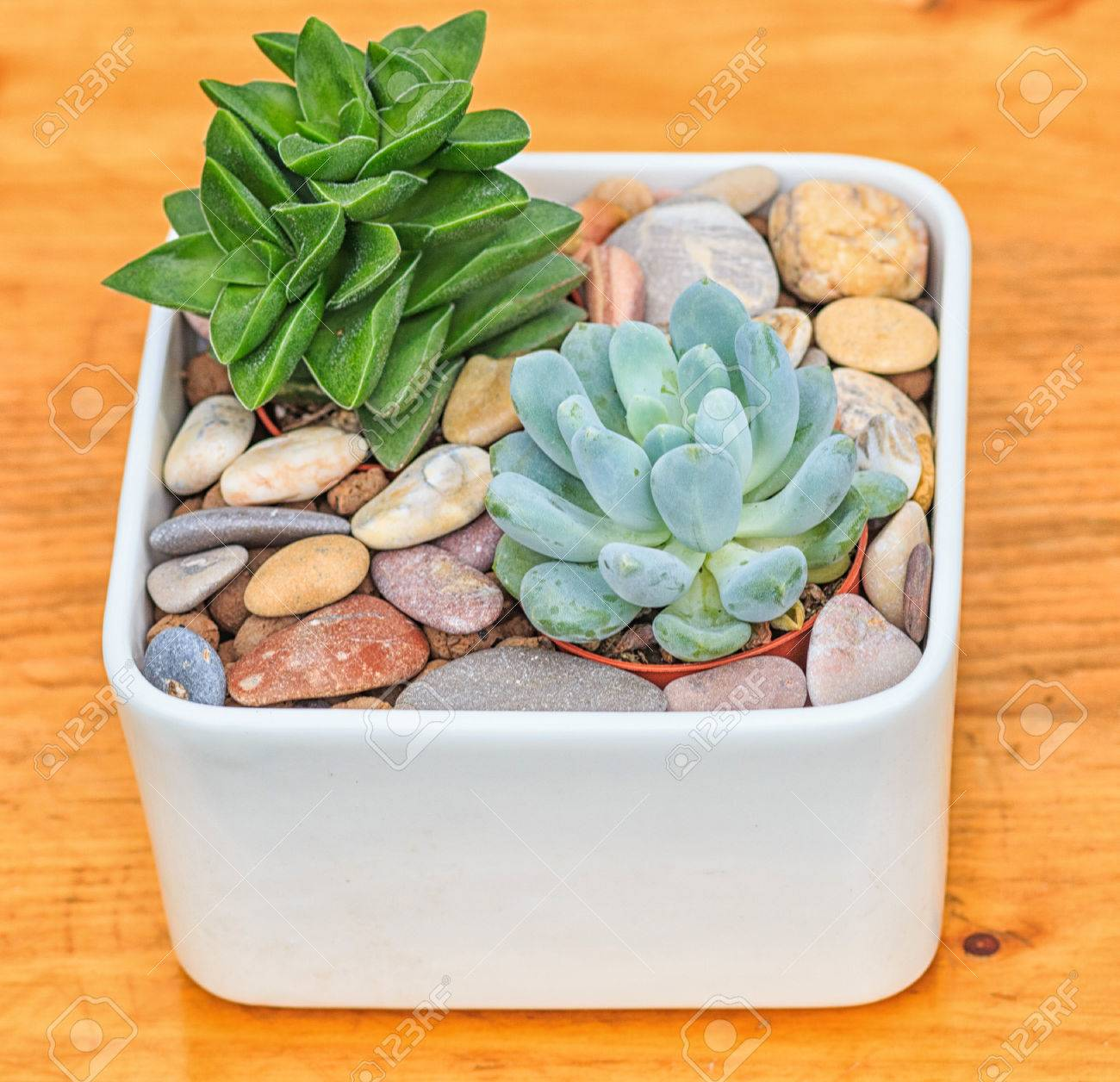 beautiful little plant, succulent in a small ceramic flower pot