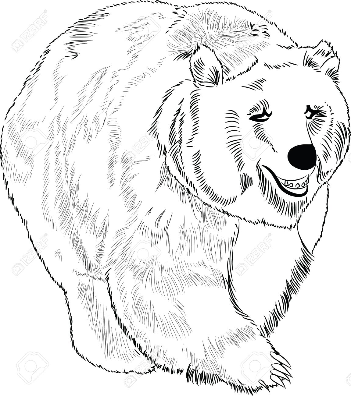 Hand drawn bear lineart Stock Vector - 15913568