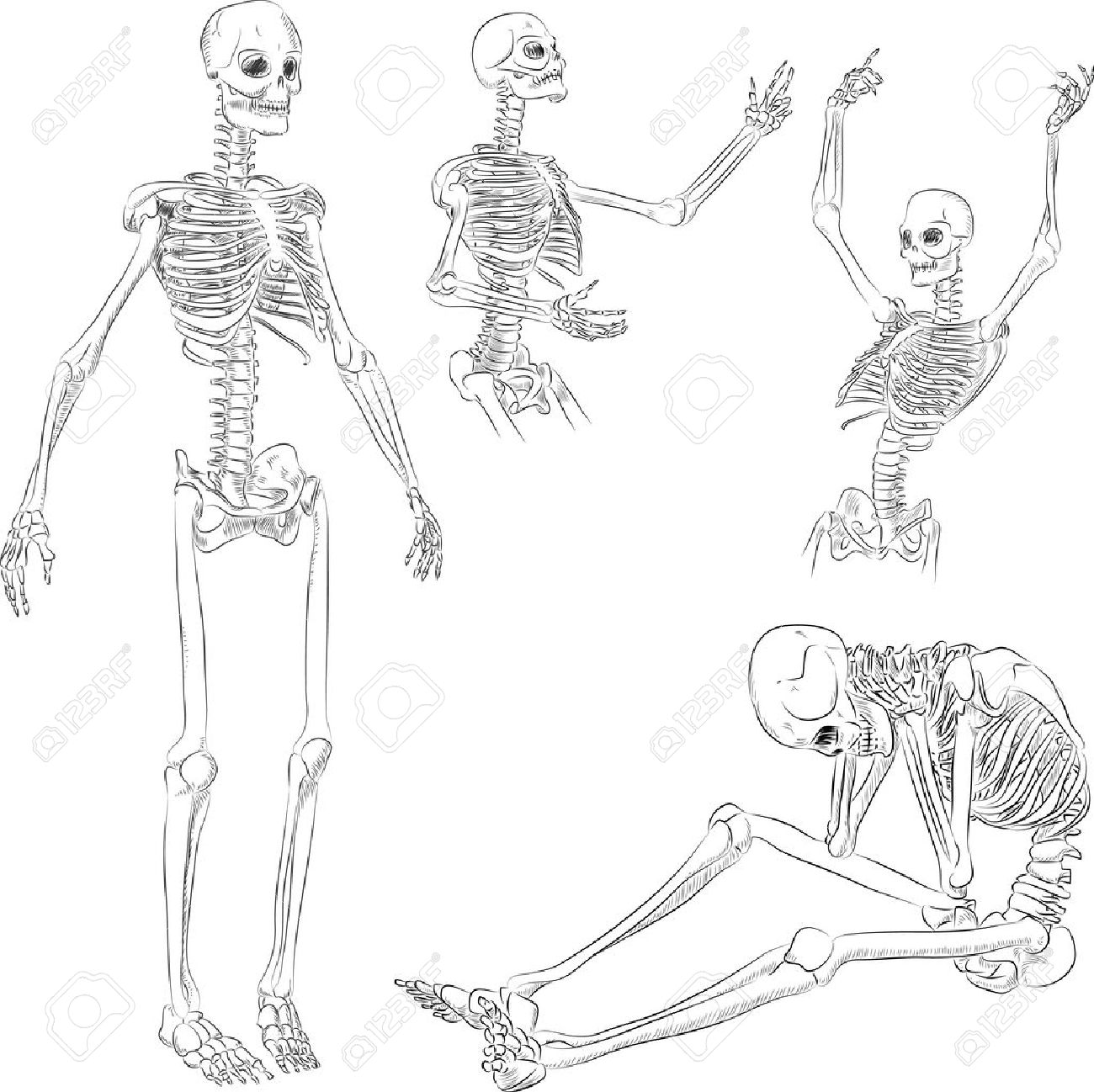Human skeleton in different active poses sketch