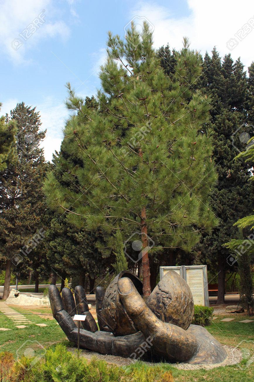 BAKU, AZERBAIJAN - APRIL 25, 2017: Hand Holds Growing Pine Tree ...