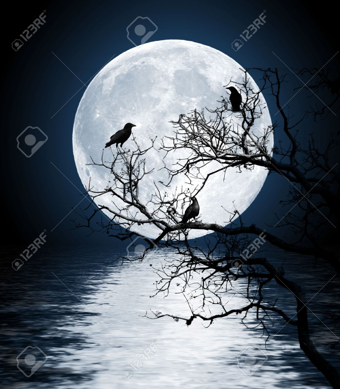 Ravens sitting on a tree shined with the full moon Stock Photo - 7258393