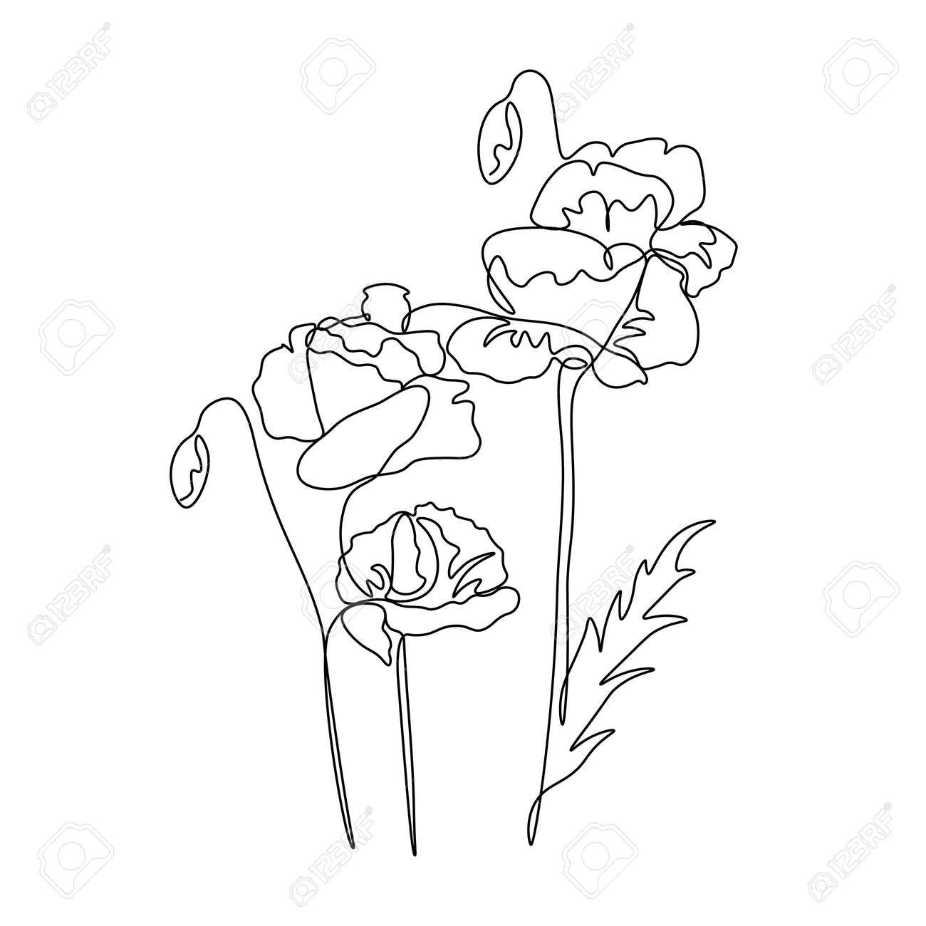 Poppy One Line Drawing. Continuous Line Flower. Hand drawn ...