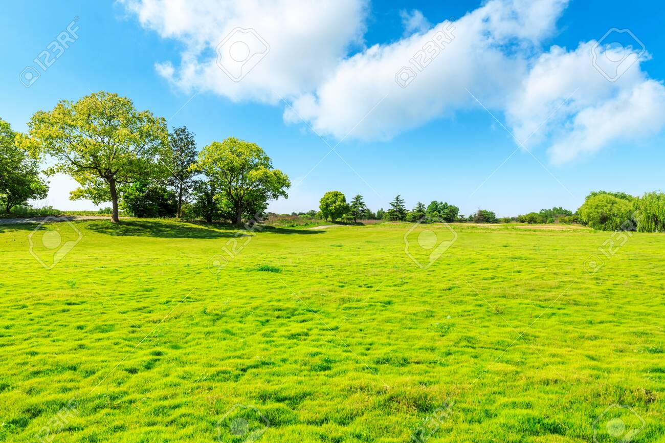 Green grass and tree under blue sky. - 147869583