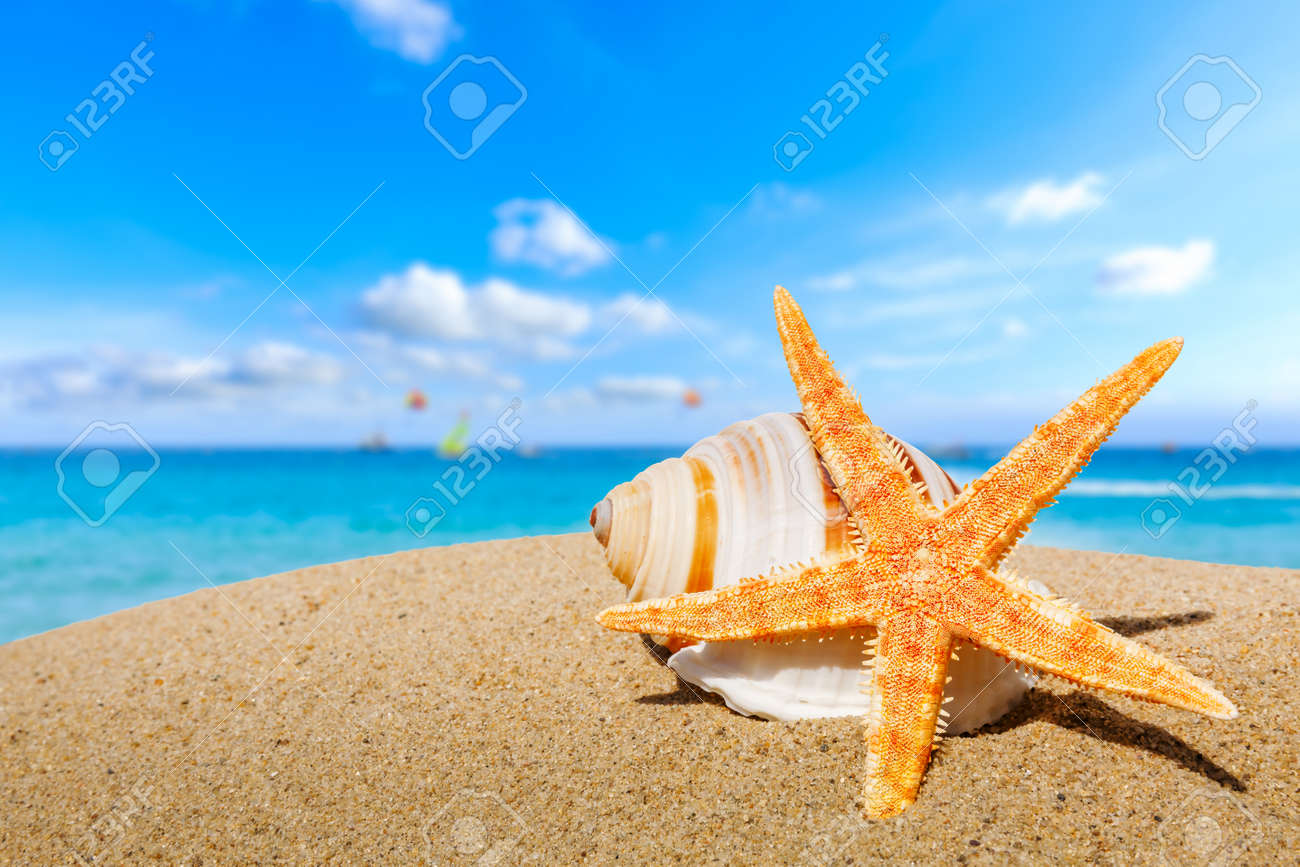 Starfish and conch on a beach sand, summer holiday background. - 168804662