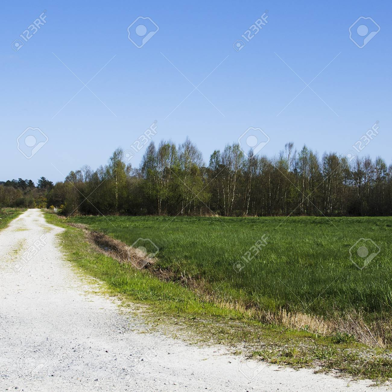 dirt road in the grass and blue sky Stock Photo - 21078558