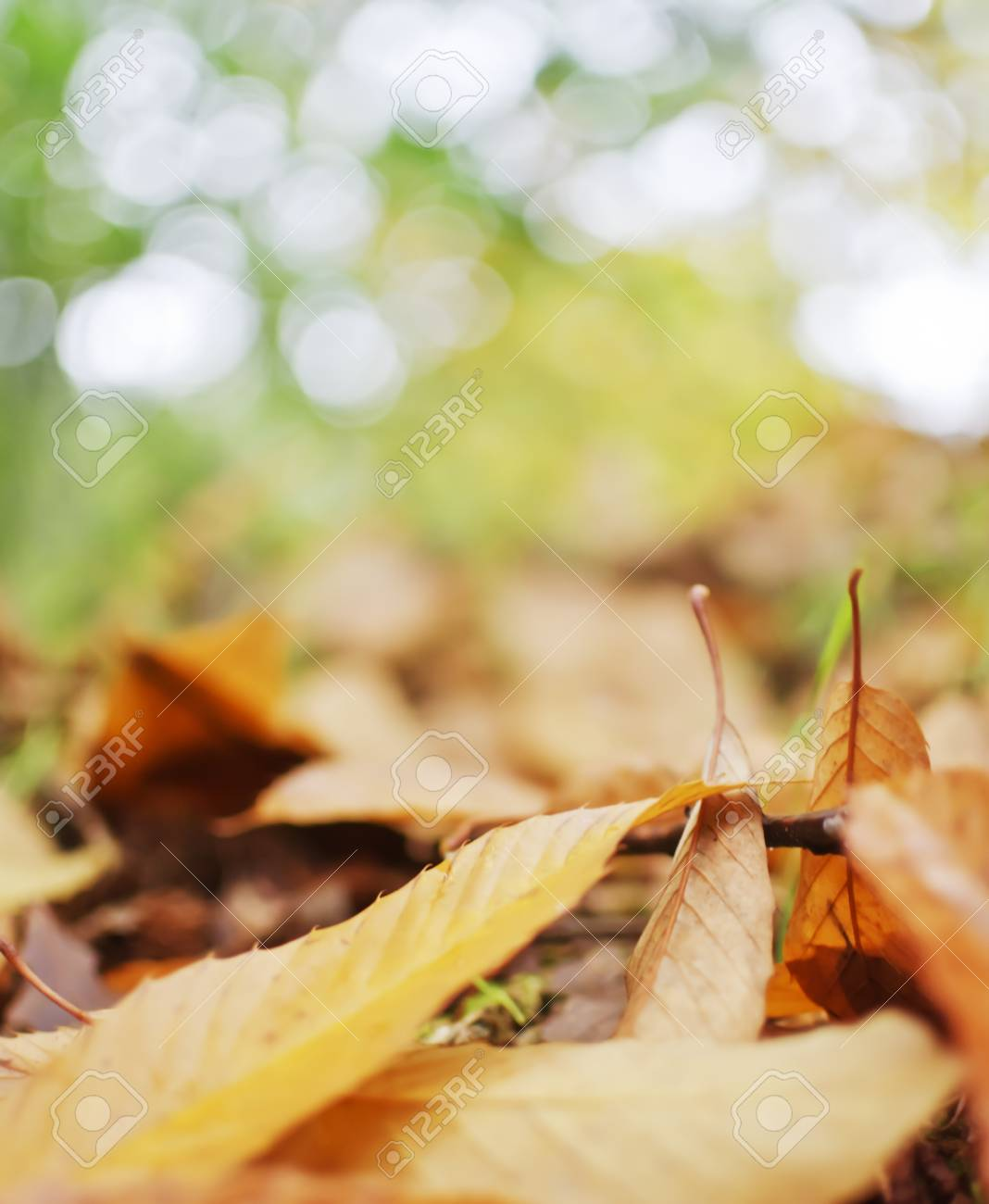 Autumn leaves in the forest. Stock Photo - 33883877