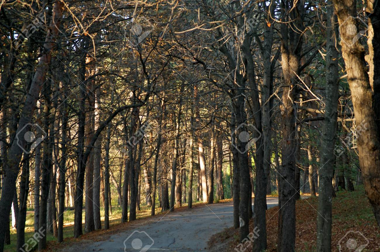 Landscape of Footpath in Autumn Forest with Sunbeams on background Stock Photo - 16251086