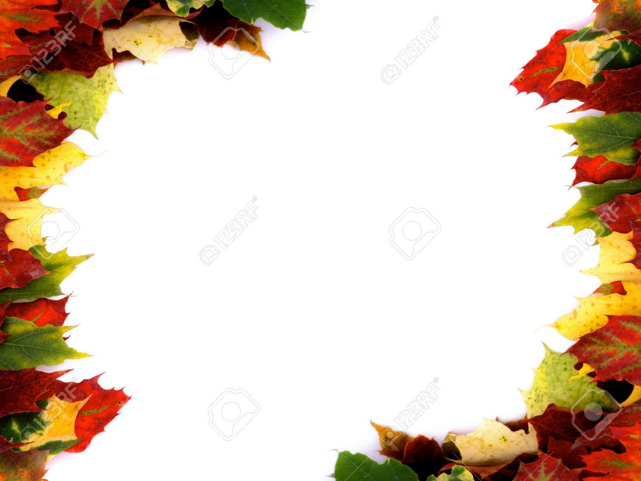 two corner borders of multi colored autumn maple leaf isolated
